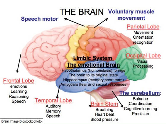 Brain Activity And Movement on Body Part With This Activity Children