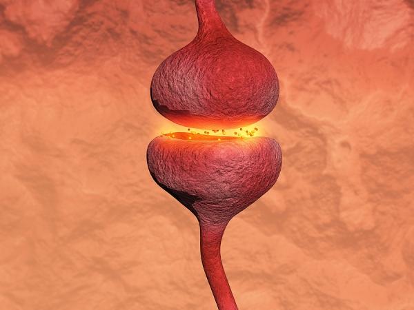 Neurotransmitter and Physical Exercise. Bigstockphoto