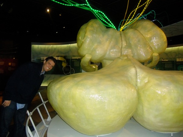 Michael Gonzalez-Wallace next to a giant Cerebellum at The Brain Exhibit Natural Science Museum New York