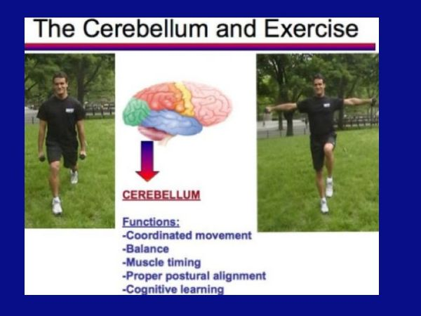 Cerebellum exercises