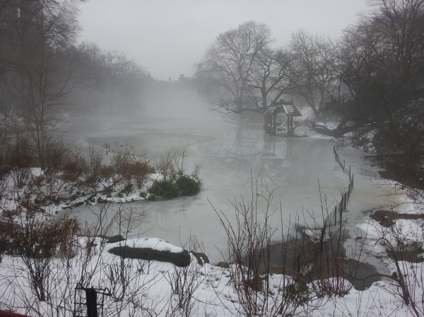 CENTRAL PARK PICTURES-CENTRAL PARK WITH FOG