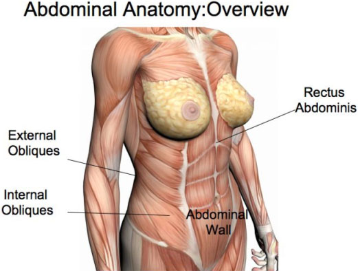 Obliques workout anatomy- MIchael Gonzalez-Wallace proposes a great workout for your obliques: Internal and external