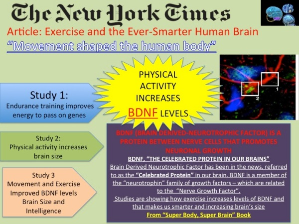New York Times explains how Exercise affects the brain, my main theory of Super Body, Super Brain