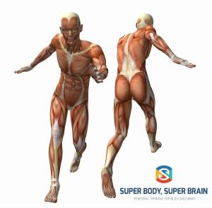 Anatomy 3D